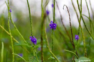 Vẻ thanh tao, thuần khiết của những bông hoa dại quanh ta