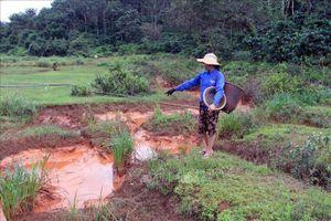 Xử lý vụ nước màu đỏ chứa bùn thải từ nhà máy bô xít chảy ra suối tại Đắk Nông