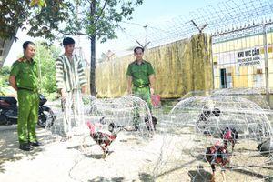 Thừa Thiên Huế: Phát hiện hàng chục con bạc, đang say sưa cá độ bằng hình thức đá gà