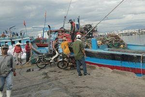 Đà Nẵng: Tăng cường các giải pháp chống khai thác hải sản bất hợp pháp