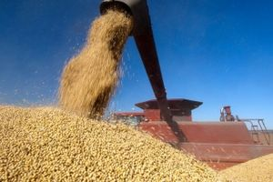 Mỹ sẽ mất vĩnh viễn 3,6 triệu ha đậu nành vì cuộc chiến thương mại?