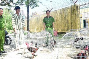 Thừa Thiên Huế: Nhiều tang vật được thu giữ tại sới bạc đá gà