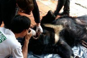 Giải cứu gấu: Bao giờ bàn chân chạm đất?