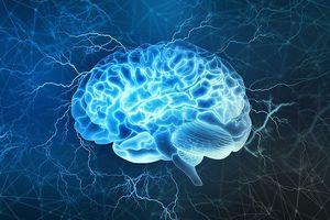 Sắp có bộ não 3D giống hệt não người đầu tiên trên thế giới