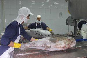 Xuất khẩu cá ngừ tăng đột biến tại một số thị trường