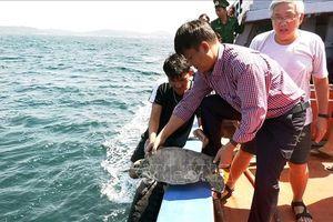 Kiên Giang thả 12 con rùa biển về môi trường tự nhiên