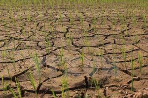 Nhiều giải pháp phòng, chống hạn hán mùa khô 2018-2019