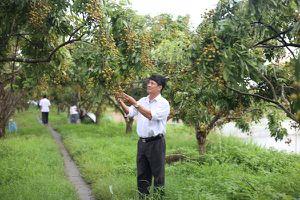 Hội thảo về phát triển cây ăn quả chủ lực phía Bắc