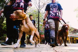 Lễ hội quy tụ các chú chó đắt tiền ở Sài Gòn