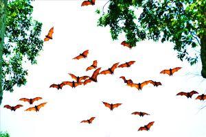 Độc đáo Chùa Dơi ở An Giang và những ngẫu nhiên kỳ lạ