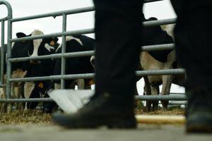 Dịch tự sát lặng lẽ lây lan trong giới nông dân Pháp