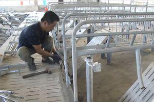Đồng Nai: Tháo dỡ trại heo 'khủng' xây dựng trái phép bên hồ Trị An