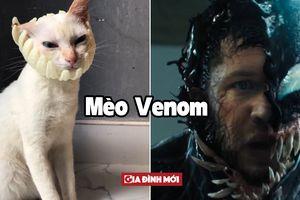 Chú mèo hóa thân thành 12 nhân vật vô cùng 'thần thái' chỉ với miếng xốp bọc lê