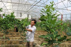 Hà Tĩnh: Làm giàu từ sản phẩm giống nông nghiệp sạch