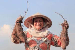 Cả làng sống khỏe nhờ giống khoai ra củ 'dính' đầy lông