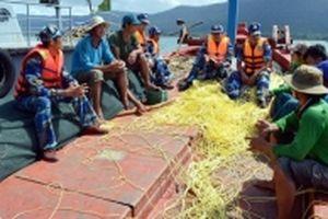Khắc phục cảnh báo của EC trong khai thác hải sản
