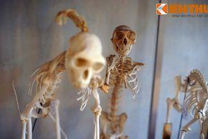 Khám phá bảo tàng trong tu viện cổ giữa rừng ở Đà Lạt