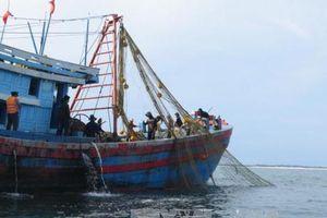 Đà Nẵng chống khai thác hải sản bất hợp pháp