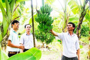Khống chế dịch hại trên cây trồng
