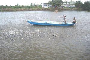 VASEP tin Mỹ sẽ công nhận tương đương cho cá tra Việt Nam