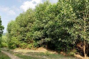 Vụ vợ chồng kêu oan: 'Khoảnh 5a không có rừng tự nhiên'