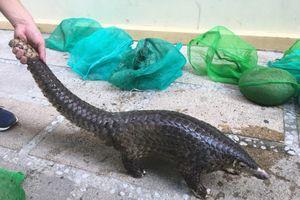 Quảng Nam: Phá đường mua bán động vật hoang dã liên tỉnh