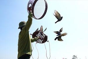 Độc đáo với lễ hội thả chim câu ở huyện ngoại thành Hà Nội