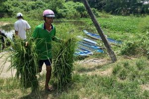 Chợ lạ mùa lũ ở An Giang: Chẳng bán thịt, cá, rau xanh, chỉ bán cỏ