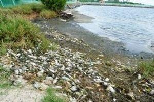 Làm rõ nguyên nhân thủy sản nuôi ven sông Trường Giang chết hàng loạt