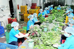 Hợp tác xã nông nghiệp tại TPHCM: Có chuyển biến, nhưng còn chậm