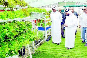 Qatar thời hậu cấm vận