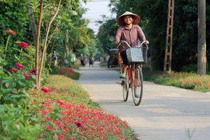 Ngắm đường hoa sam độc nhất ở Quảng Bình