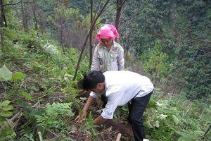 Mù Cang Chải (Yên Bái): Chủ động phòng chống cháy rừng trong mùa khô