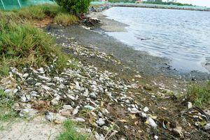 Quảng Nam: Khẩn trương tìm nguyên nhân cá nuôi trong ao hồ chết hàng loạt