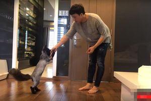 Trấn Thành khoe tài huấn luyện thú cưng