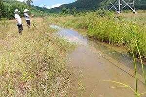 TT-Huế: Kênh tiền tỷ 'biến mất', đồng ruộng khát nước
