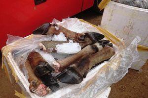 Hơn 5 tạ chân trâu, bò không nguồn gốc bị bắt giữ