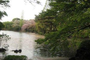 Bảo vệ công viên ở Nhật hơn 2 năm không thu vé vì kém... tiếng Anh