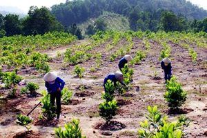 Hỗ trợ đồng bào dân tộc thiểu số trồng rừng sản xuất
