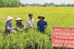 Nâng cao chất lượng sản xuất lúa giống (Tiếp theo và hết) (*)