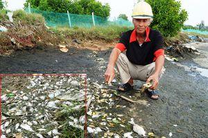 Cá nuôi dọc sông Trường Giang chết hàng loạt