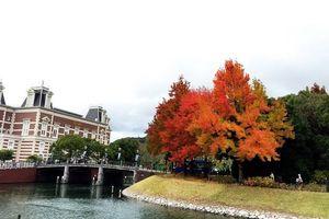 Mê mẩn mùa thu rực rỡ sắc màu ở Nagasaki