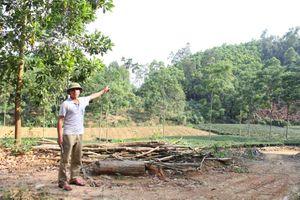 Thái Nguyên: Cấp đất trồng rừng cho doanh nghiệp chồng lấn lên đất của dân ở Đồng Hỷ