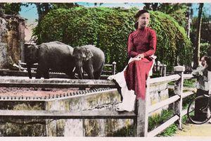 Ảnh độc đáo về đàn voi ở Thảo Cầm Viên Sài Gòn xưa