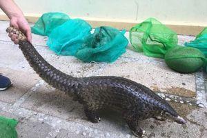 Quảng Nam: Phá đường dây mua bán động vật hoang dã liên tỉnh