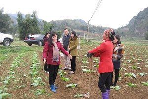 Huyện Ngân Sơn (Bắc Kạn): Giảm tỷ lệ hộ nghèo theo hướng bền vững