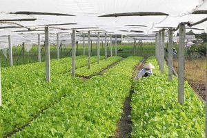 Bộ Công Thương thực hiện kế hoạch của Chính phủ khuyến khích đầu tư vào nông nghiệp, nông thôn