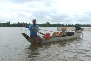 Mực nước sông Cửu Long, sông Sài Gòn đang xuống