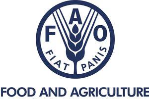 FAO kêu gọi bảo vệ các quyền của lực lượng lao động nông nghiệp