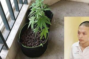 Tăng cường phòng ngừa tội phạm ma túy tại các khu chung cư